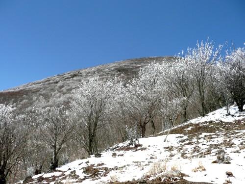 20100327高見山 074 (63).jpg