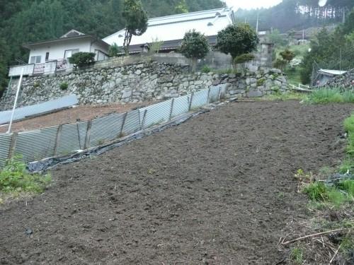 201005012蒟蒻畑 002.jpg