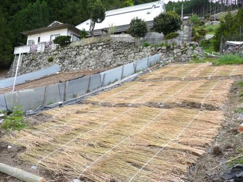 201005012蒟蒻畑 006.jpg