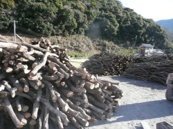 201103炭焼き体験ツアー 033.JPG