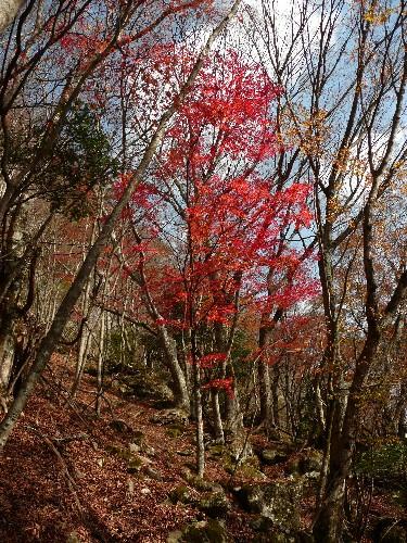 20091121観音岳 040.jpg