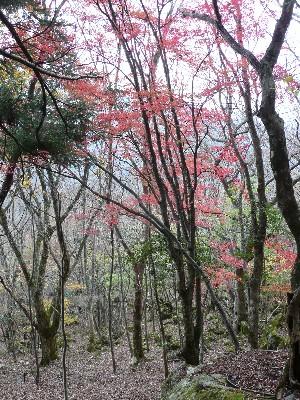20091121観音岳 043.jpg