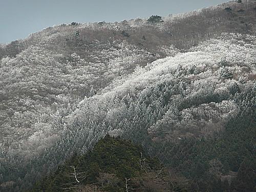 20100218お伊勢参り 004.jpg
